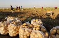 عن الكارثة الاقتصادية التي ضربت حقول الانتاج الزراعي.. والفشل الحكومي!
