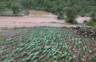 لجان مختصة لإحصاء الأضرار التي تعرضت لها المحاصيل الزراعية.. والتعويض لاحقاً
