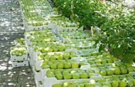 السويداء.. منح 400 شهادة منشأ لتصدير نحو 9 آلاف طن تفاح