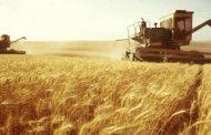 الرئيس الأسد يوجه برفع سعر استلام محصول القمح من الفلاحين.. والحكومة ترصد 400 مليار ليرة سورية لدفع مستحقاتهم مباشرةً
