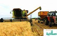 الفاو: ارتفاع كبير في أسعار الأغذية العالمية في شهر نوفمبر/ تشرين الثاني