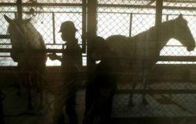 ظهور فيروس جديد قتل مئات الخيول في تايلاند!