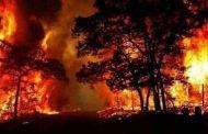 وزارة الزراعة تعلن نتائج التحقيقات الاولية في كارثة حرائق الغابات